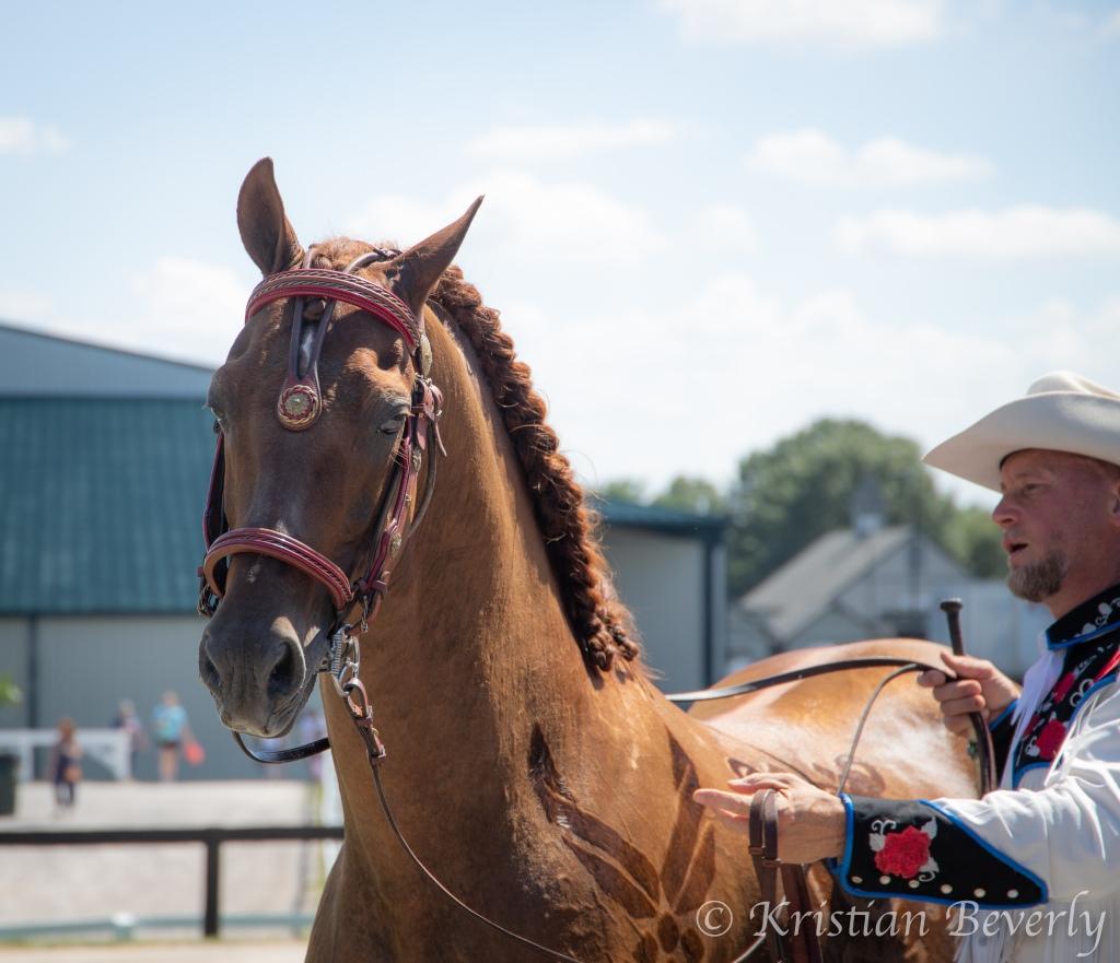 Horse standing from Breyerfest 2019